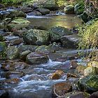 Little Forest Stream by Bette Devine