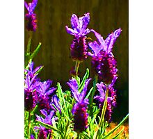 My Surreal Lavender Photographic Print