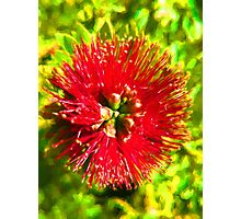 My Surreal Christmas Flower Photographic Print