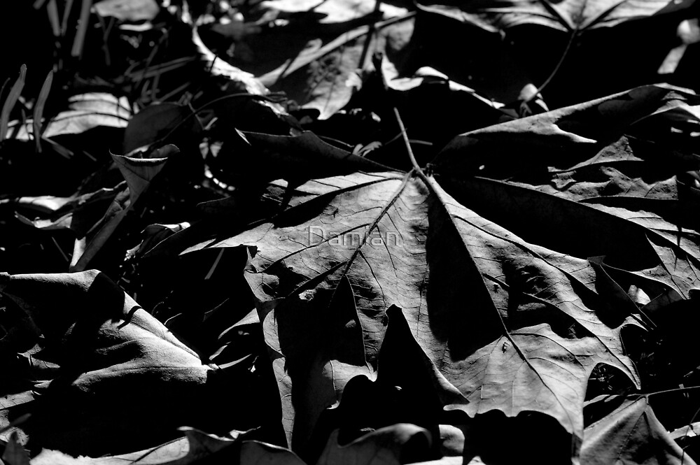 Shadows Lengthen by Damian