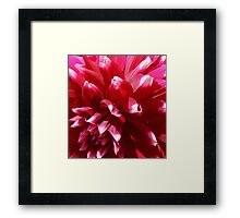 Flowers – 2 Framed Print