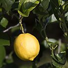 Lemon Yellow by Laura Sykes