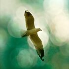 Flight of the Seagull by Studio23