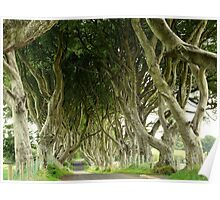 The Dark Hedges, Northern Ireland Poster