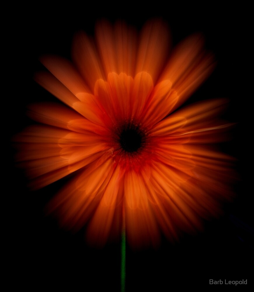 Bloomburst! by Barb Leopold