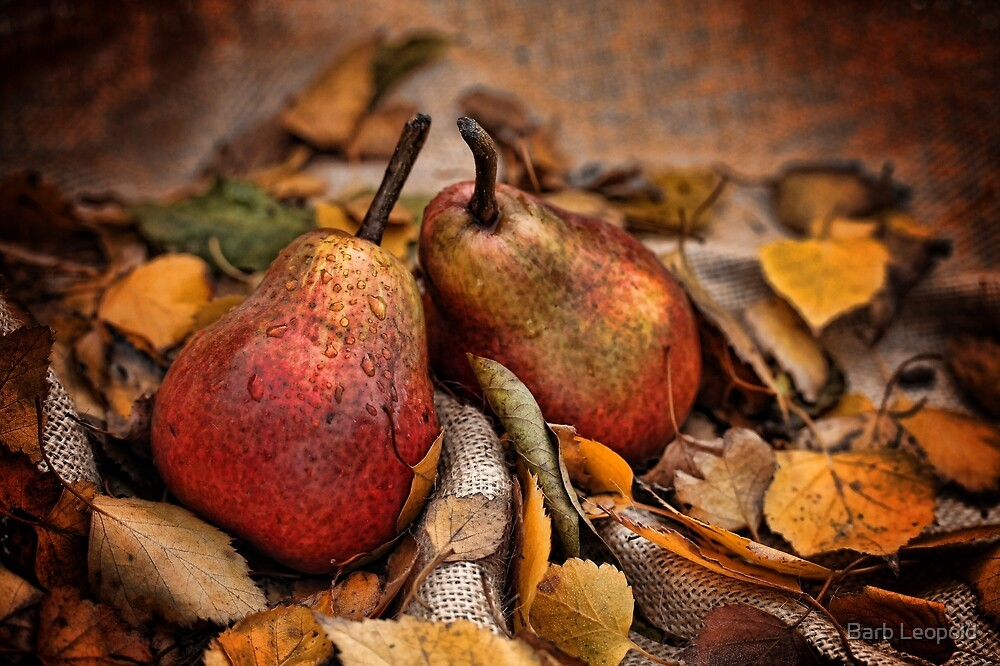 Pair of Pears by Barb Leopold