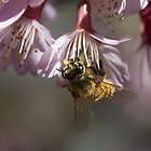 Working Bee by Steve Randall