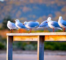 Seagulls at Sunset by Alison Hill