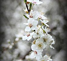 Blossoming by Karen Tregoning