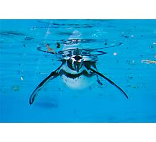 Penguin at London Zoo Photographic Print