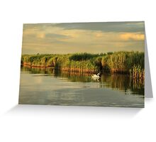 Old swan swims amongst the reeds  Greeting Card