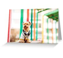 Yorkshire terrier listening music Greeting Card