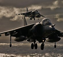 Hovering Harrier by captureasecond