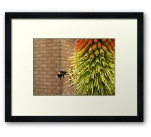 Hovering Bumble Bee Framed Print