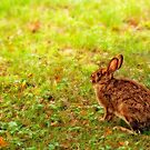 lovely bunny by Manon Boily