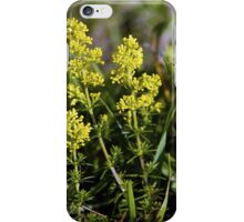 Galium Verum (Lady's Bedstraw), Inishmore, Aran Islands iPhone Case/Skin
