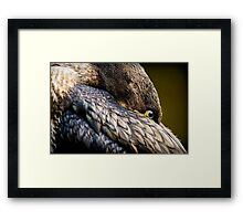 Resting cormorant (phalacrocorax carbo) Trentham Gardens, Staffordshire, UK. Framed Print