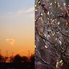 First day of spring by Noukka Signe