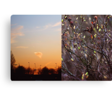 First day of spring Canvas Print
