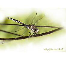 ...its a small World ..the 'libella /dragonfly'  Photographic Print