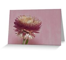 Many Pink Petals  Greeting Card