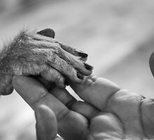 View of Human palm holding a small monkey hand by Stanciuc