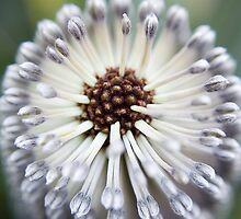 Banksia 1 by Jaxybelle