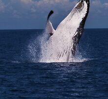 Humpack Whale -  Breaching 3 by Jaxybelle