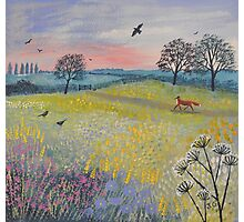 Across Evening Meadow Photographic Print