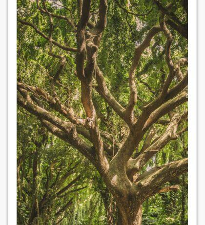 Mystical Tree Sticker