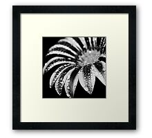 Dark Secrets Framed Print