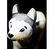 Lego Siberian Husky  Photographic Print