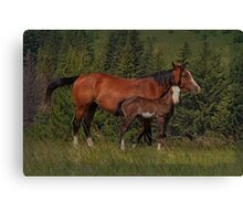 The Love Of A Mom Canvas Print