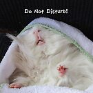 Do Not Disturb! by Olga