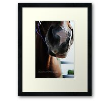 Horses Muzzle Soft and Touchable Framed Print