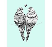 Blue Love Birds Photographic Print