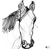 Horse Sketch Photographic Print