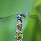 dragonfly by Terri~Lynn Bealle