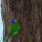 Parrot Leith Park Victoria 20160613 7119  by Fred Mitchell