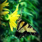 Butterfly on Yellow Wildflower by angelandspot