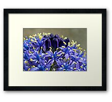 Now That's Purple Framed Print