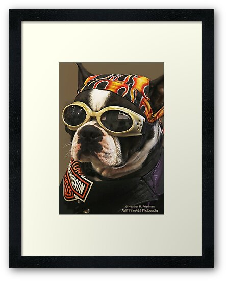 Cool Dude! by Heather Friedman