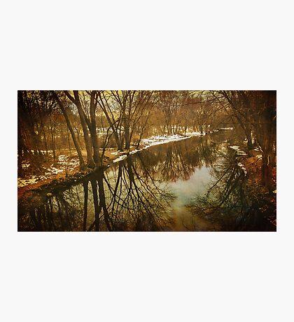 Winter trees along the Assabet River Photographic Print