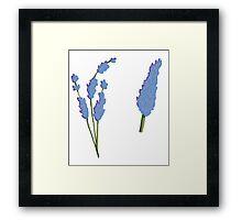 Bunch of Lavender Framed Print