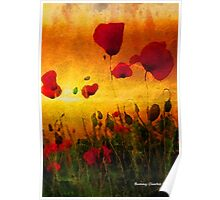 Poppy Sunset Poster