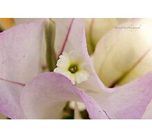 Bougainvilaea Photographic Print