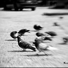 Pigeons on the Move by KatMagic Photography