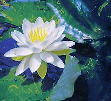 Water Lily On Sandusky Bay - Color Splash by SRowe Art