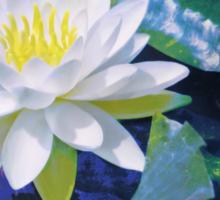 Water Lily On Sandusky Bay - Color Splash Sticker