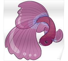 Purple, Gold and Blue Betta Fighting Fish  Poster